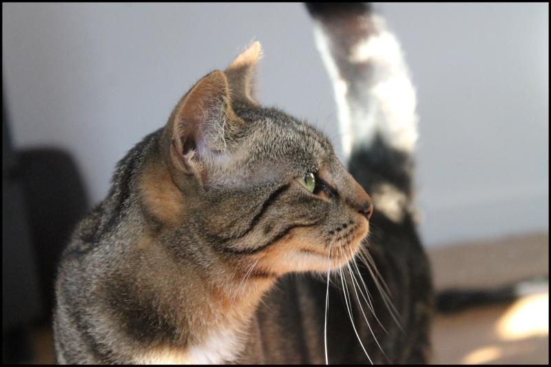Jedaï, femelle, 15 mois - ADOPTÉE Img_8012