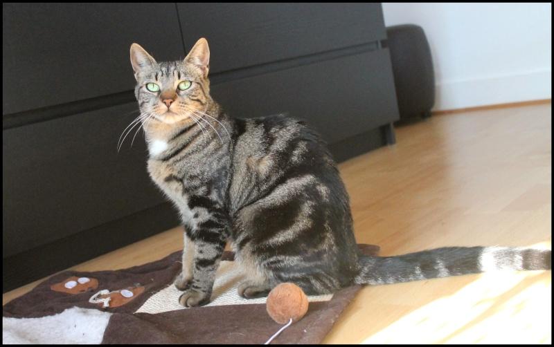 Jedaï, femelle, 15 mois - ADOPTÉE Img_8111