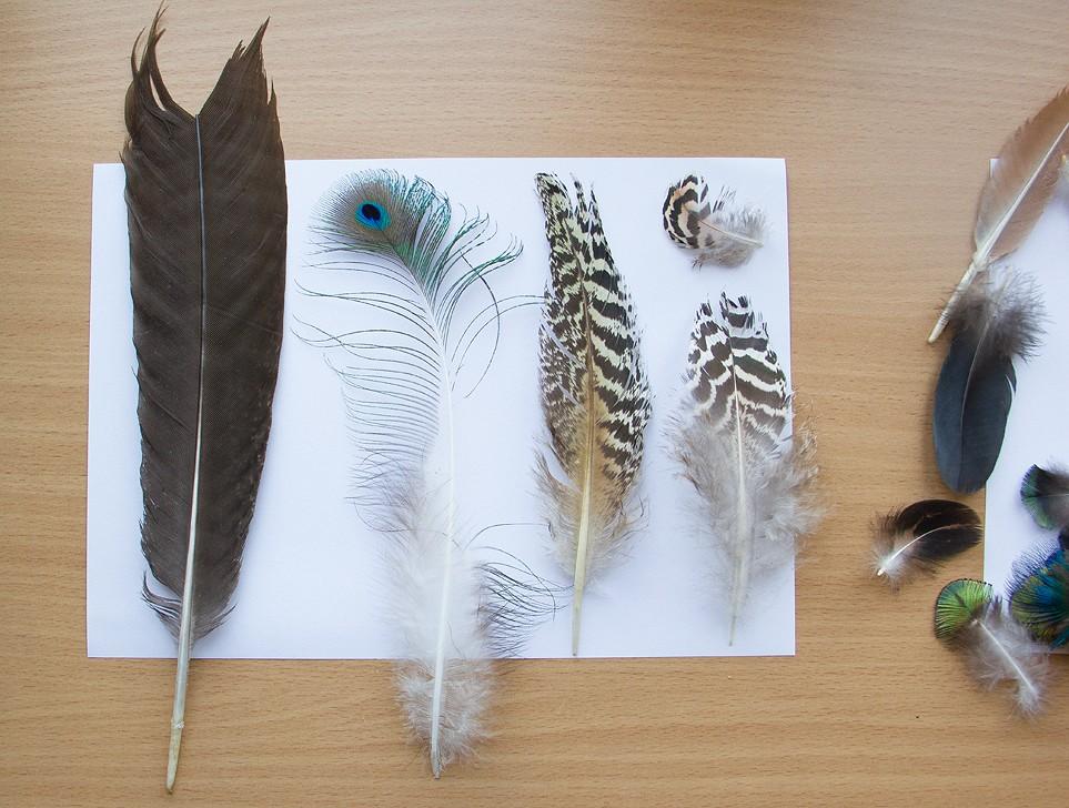 Plumes de Paon, Ibis rouge, Perroquet et Flamant  Plumep10