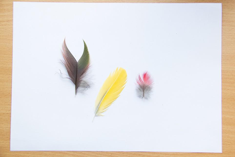 Plumes de Paon, Ibis rouge, Perroquet et Flamant  Plumep15