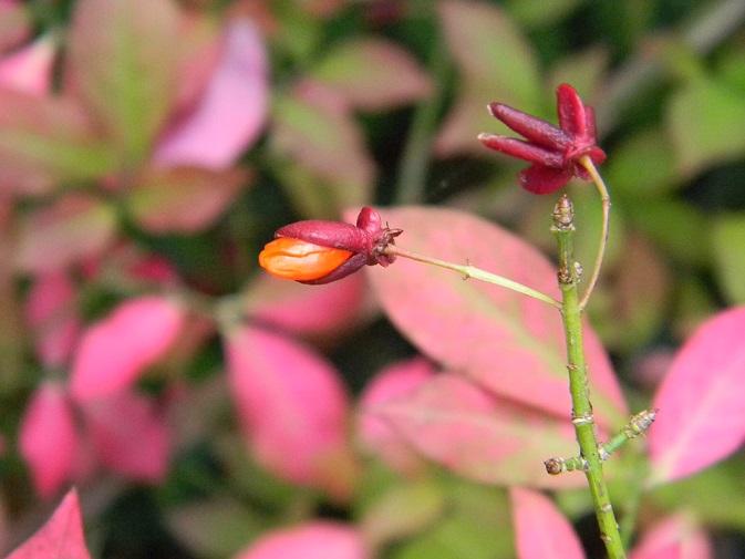 Ambiance automne 2015 Aut611