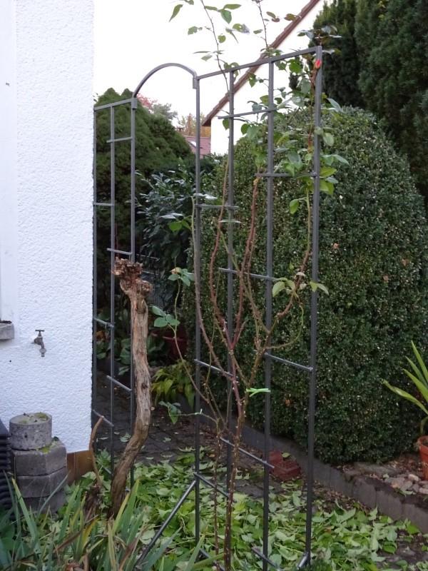Trompetenbaumgewächse (Bignoniaceae) - Seite 2 Dsc00111