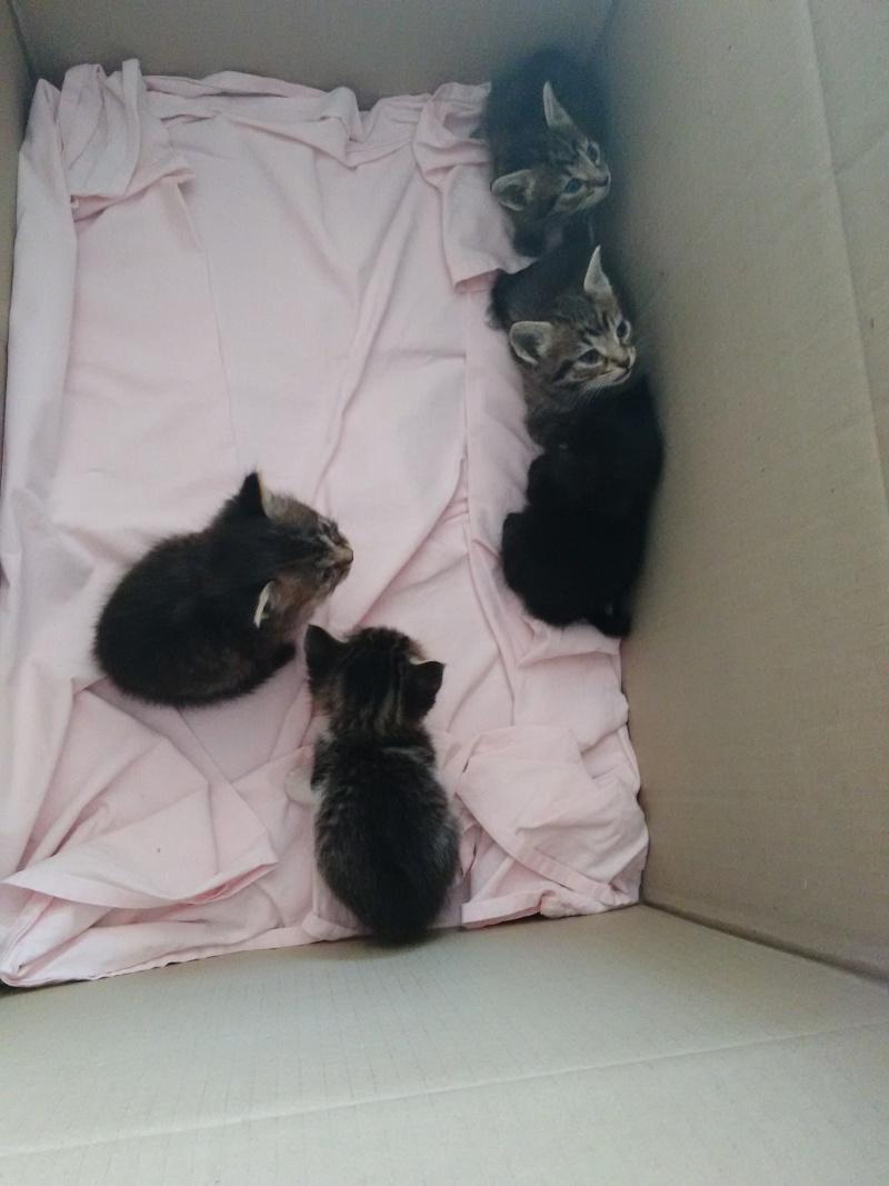 5 chatons dans un carton Chaton10