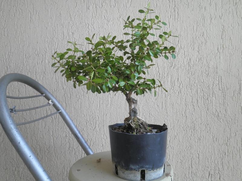 pianta di bosso - Pagina 2 P9280016