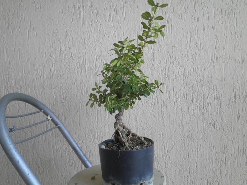 pianta di bosso - Pagina 2 P9280017