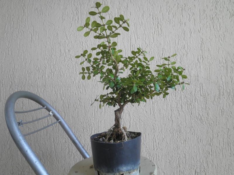 pianta di bosso - Pagina 2 P9280018
