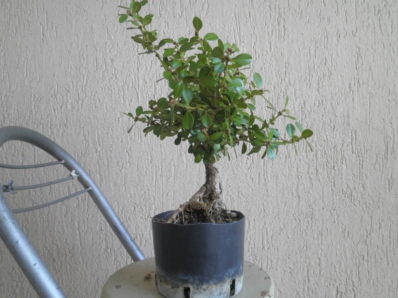 pianta di bosso - Pagina 2 P9280019