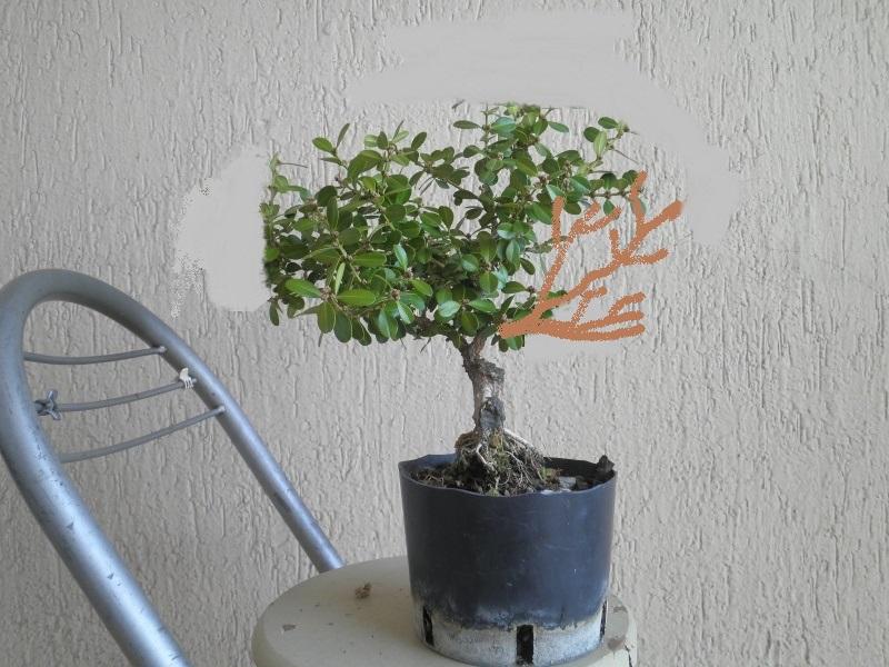 pianta di bosso - Pagina 2 P9280032