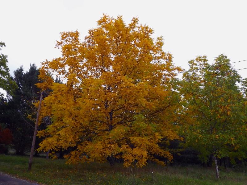Ambiance automne 2015 Dscf7710