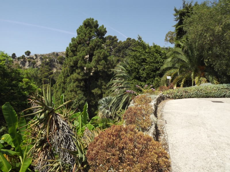 (Italie) Giardini Botanici Hanbury - Mortola Hanbur11