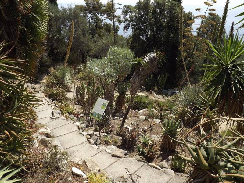 (Italie) Giardini Botanici Hanbury - Mortola Hanbur15