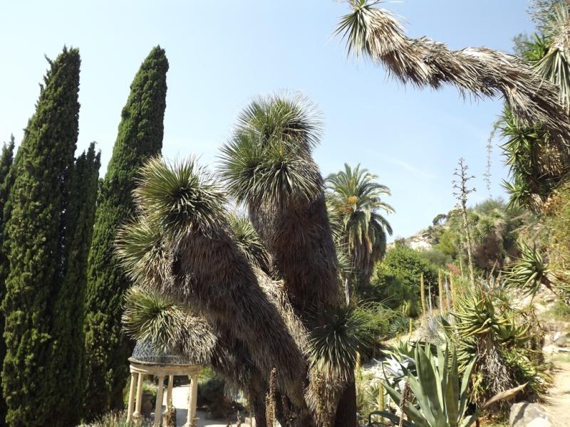 (Italie) Giardini Botanici Hanbury - Mortola Hanbur16