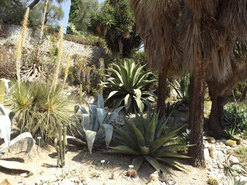 (Italie) Giardini Botanici Hanbury - Mortola Hanbur18