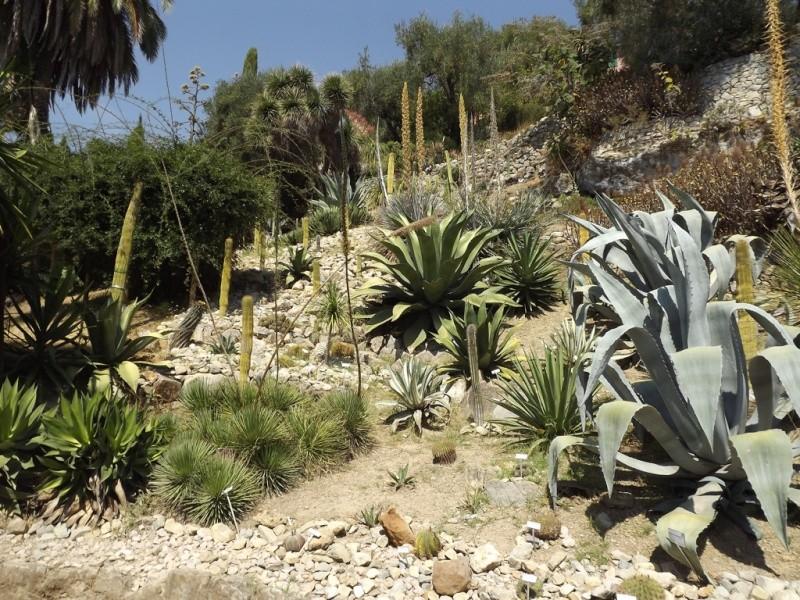 (Italie) Giardini Botanici Hanbury - Mortola Hanbur19