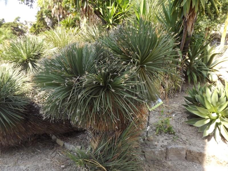(Italie) Giardini Botanici Hanbury - Mortola Hanbur20