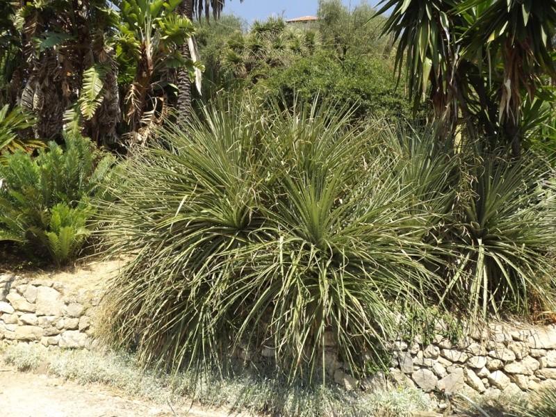 (Italie) Giardini Botanici Hanbury - Mortola Hanbur22