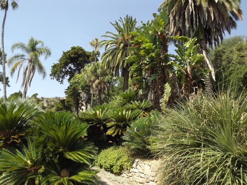 (Italie) Giardini Botanici Hanbury - Mortola Hanbur23