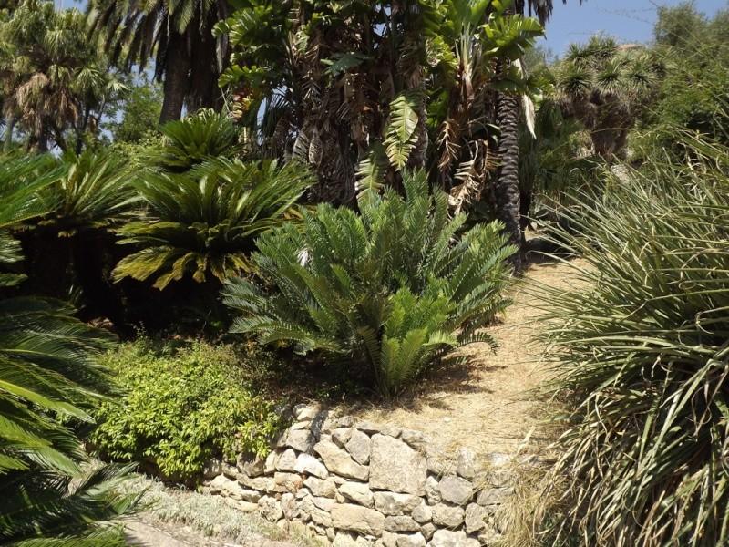 (Italie) Giardini Botanici Hanbury - Mortola Hanbur24