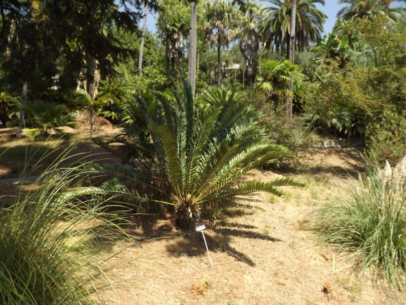 (Italie) Giardini Botanici Hanbury - Mortola Hanbur26