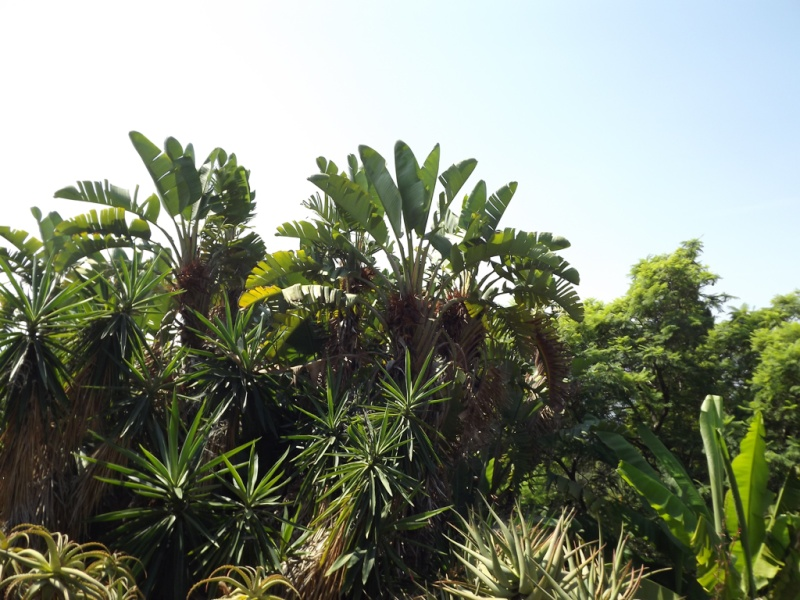 (Italie) Giardini Botanici Hanbury - Mortola Hanbur27