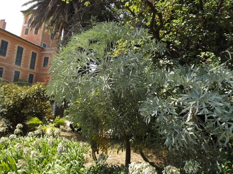 (Italie) Giardini Botanici Hanbury - Mortola Hanbur30