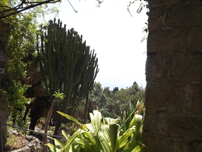 (Italie) Giardini Botanici Hanbury - Mortola Hanbur31