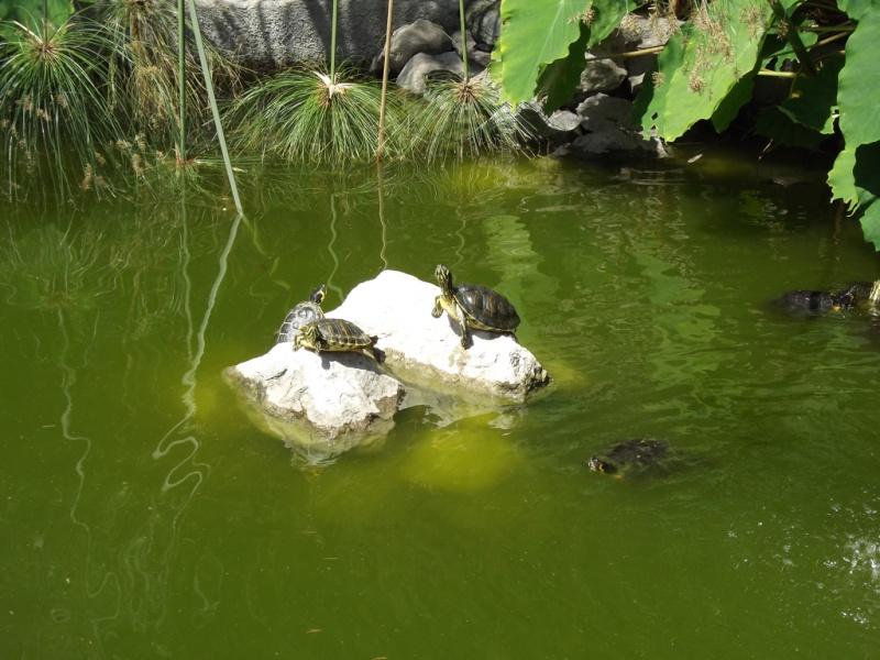 (Italie) Giardini Botanici Hanbury - Mortola Hanbur35