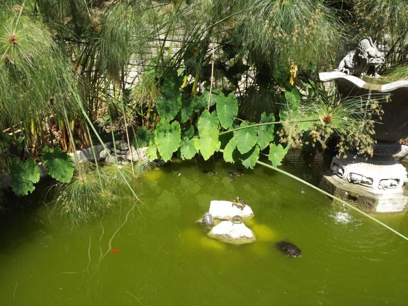 (Italie) Giardini Botanici Hanbury - Mortola Hanbur36