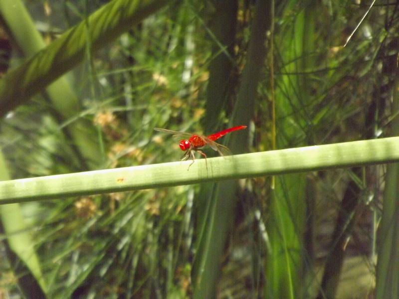 (Italie) Giardini Botanici Hanbury - Mortola Hanbur37