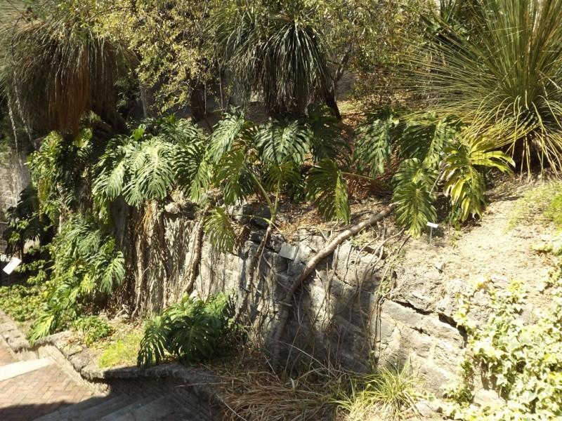 (Italie) Giardini Botanici Hanbury - Mortola Hanbur40