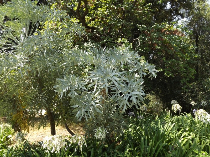 (Italie) Giardini Botanici Hanbury - Mortola - Page 2 Hanbur53
