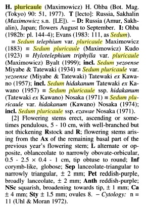 Hylotelephium pluricaule  Sedum_11