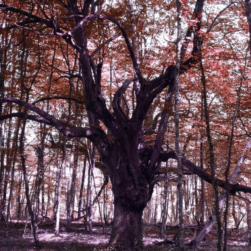 La forêt enchantée... L'esprit des bois Vieux_11