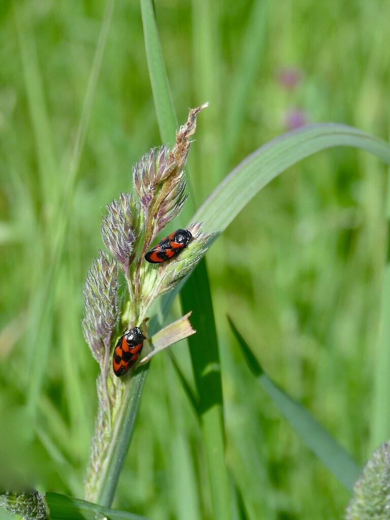 Étrange insecte 43920910