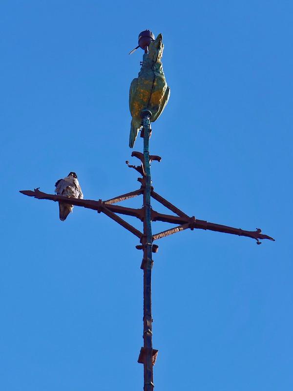 Pèlerin sur un clocher 49888411