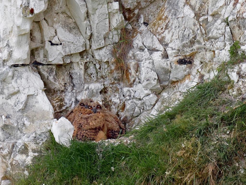 Nid dans la falaise 51197410
