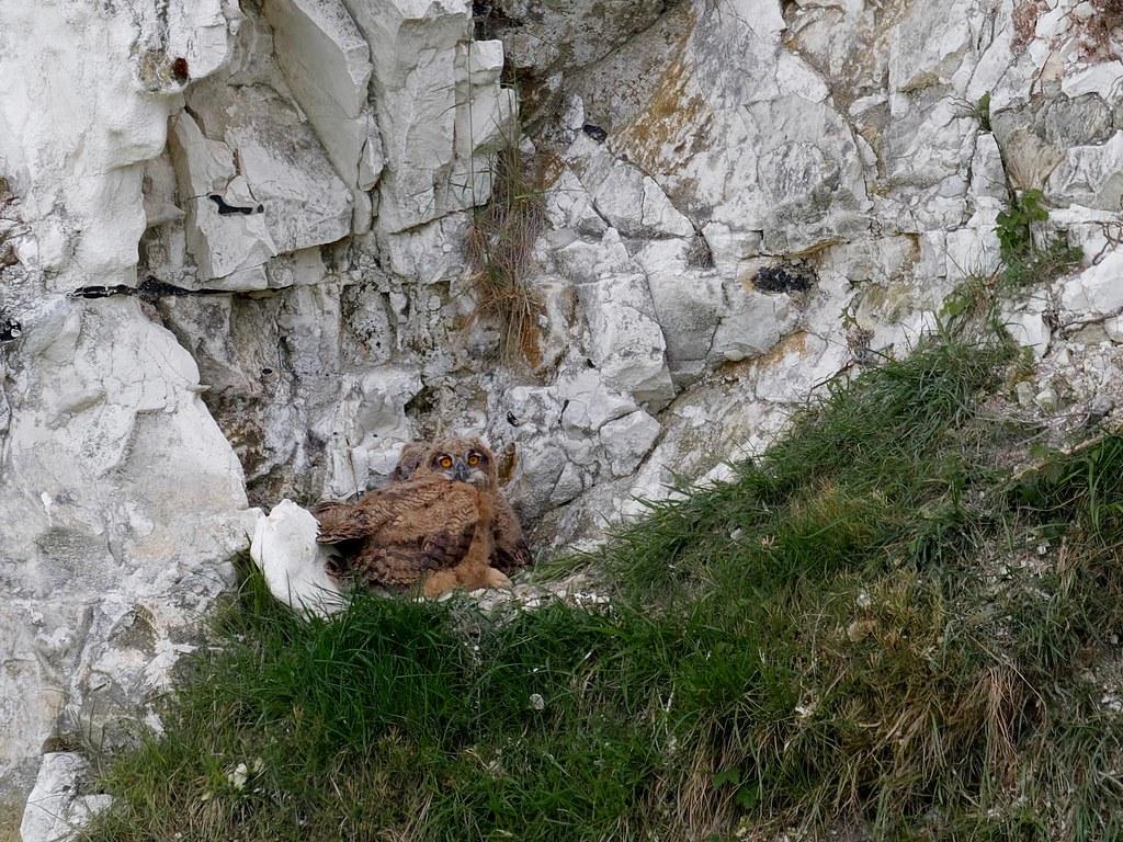 Nid dans la falaise 51198110