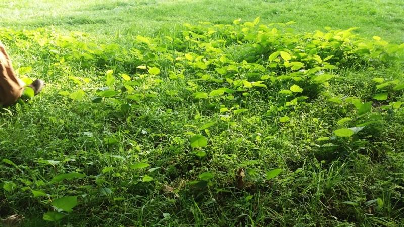 [bank] Vos photos de référence perso : Environnements naturels 20150919