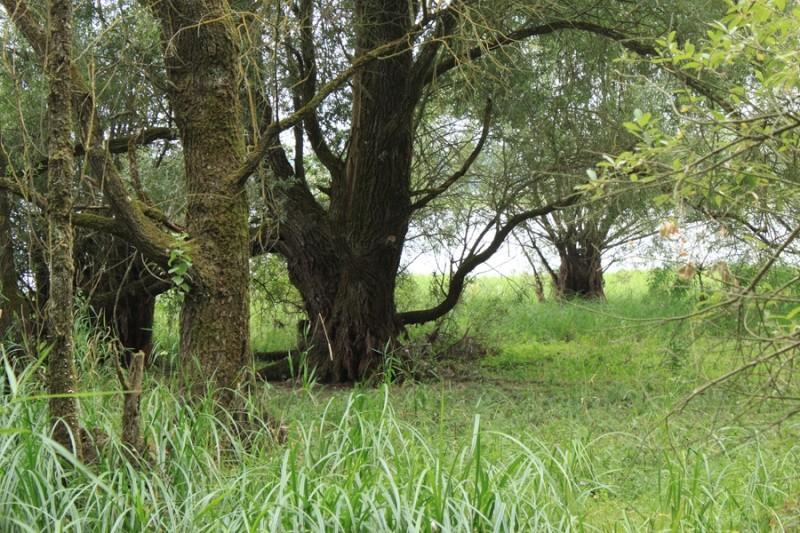 [bank] Vos photos de référence perso : Environnements naturels Img_1117