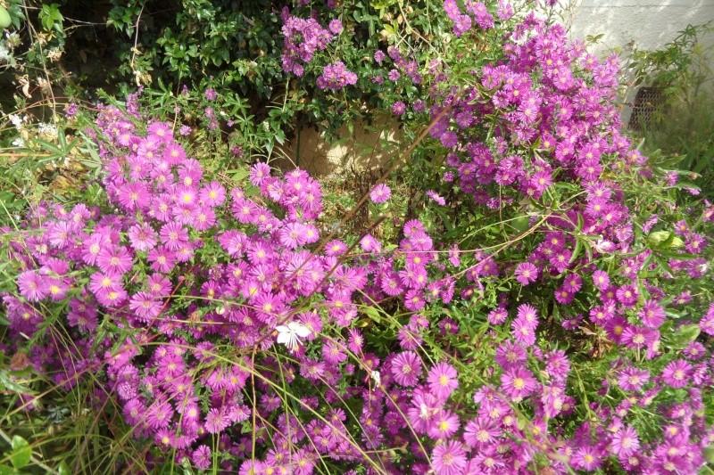 floraisons d'octobre - Page 14 01510
