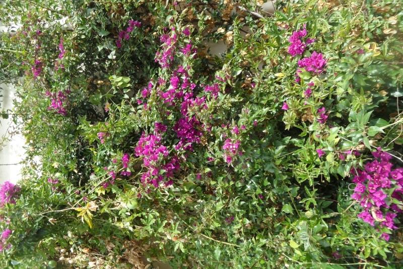 floraisons d'octobre - Page 14 01710