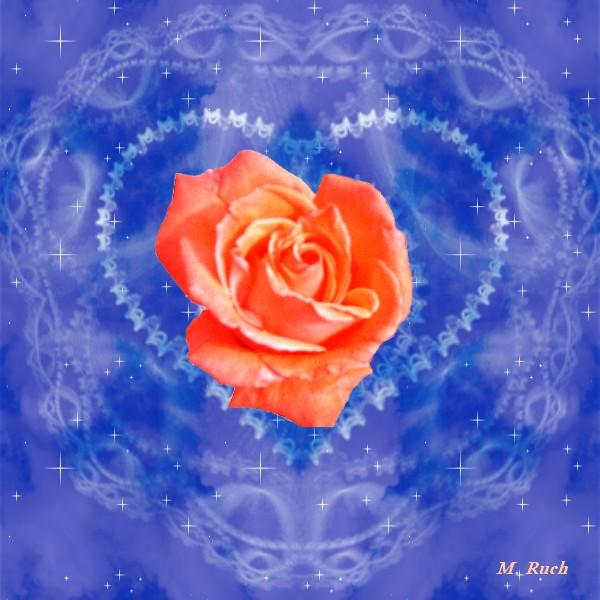 Une rose d'espoir 52410211