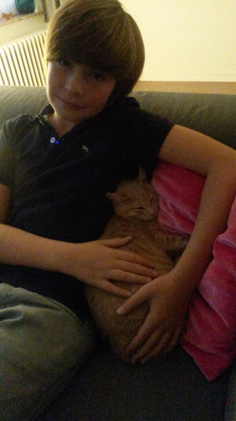 LEON, adorable chaton de 3 mois à la robe roux clair 20151011