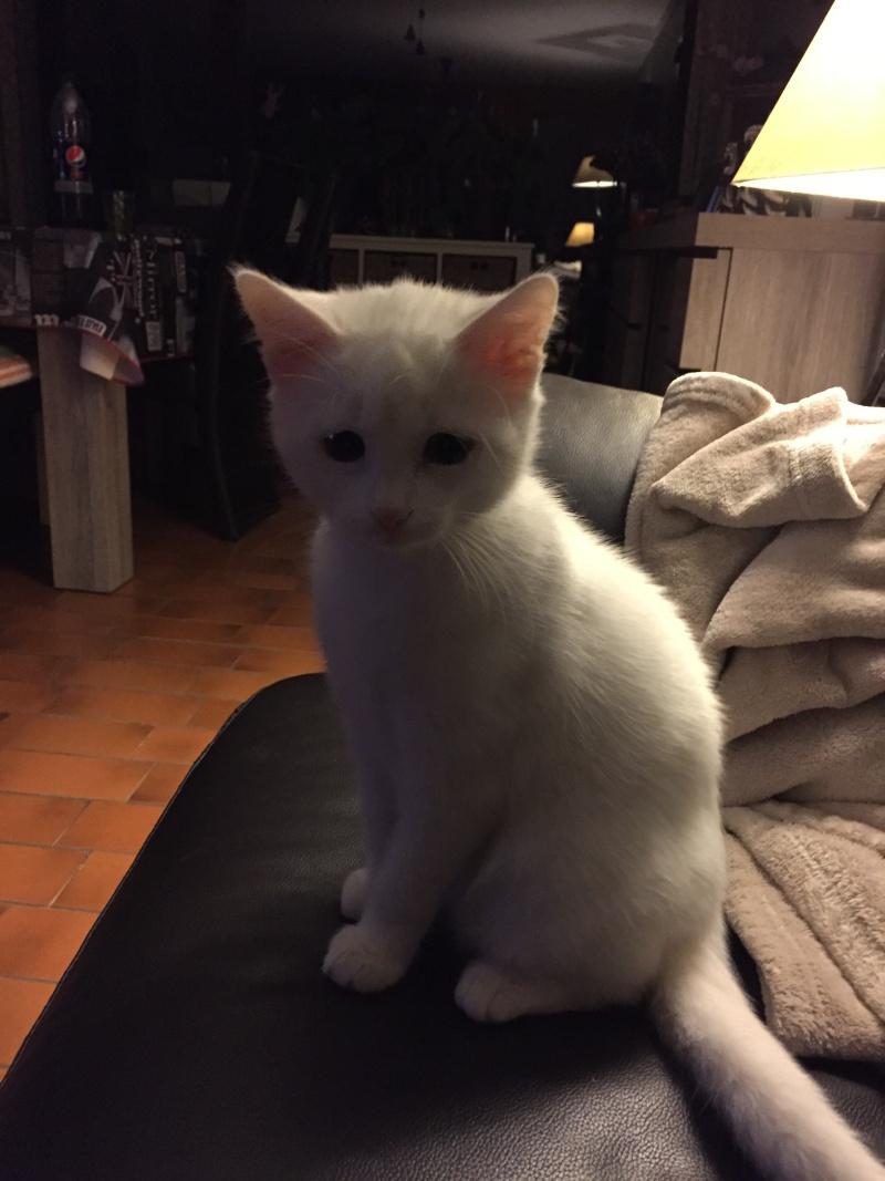 MARIE, adorable chatonne de 3 mois à la robe blanche Img_1412