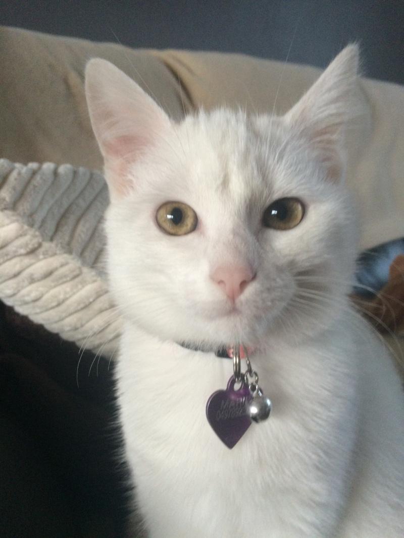 MARIE, adorable chatonne de 3 mois à la robe blanche Img_1513