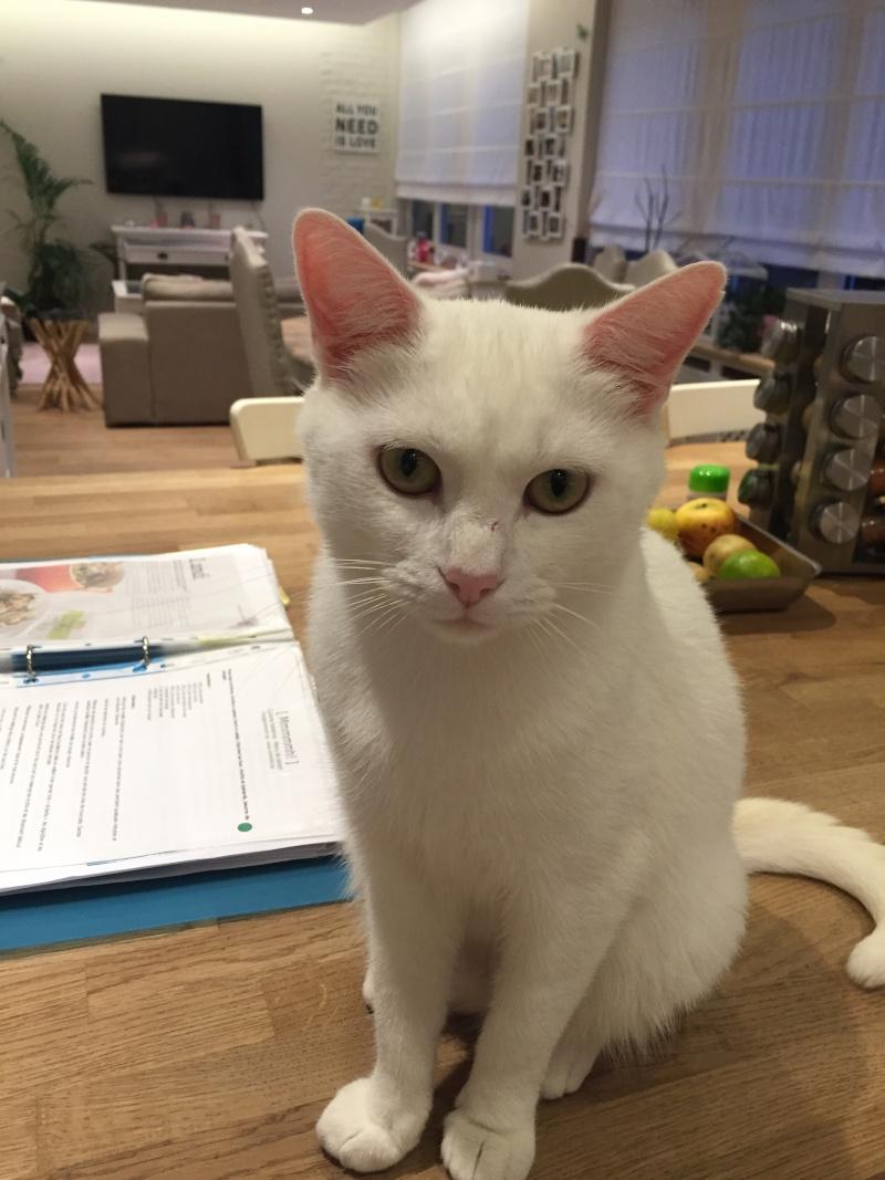 HORTENSE, très belle chatte blanche de 8 mois Img_3222