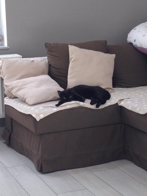 NOLA, adorable petite panthère noire de 7 mois Nolabe10