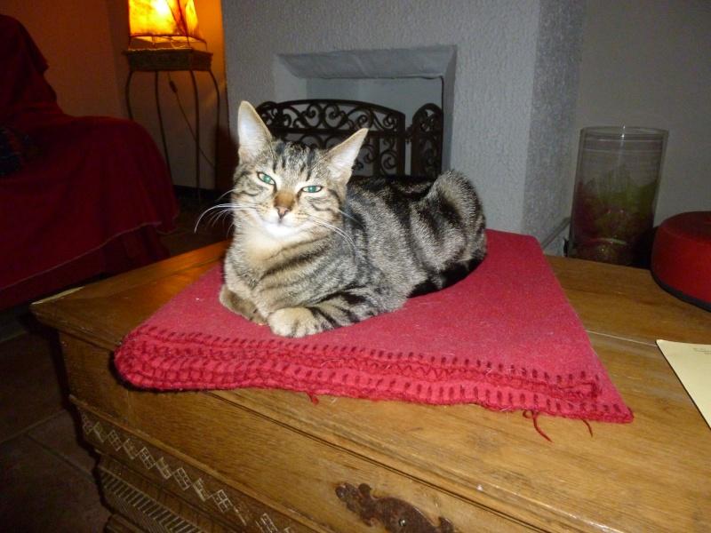 GRIBOUILLE, adorable chaton marbré de 10 semaines P1020112
