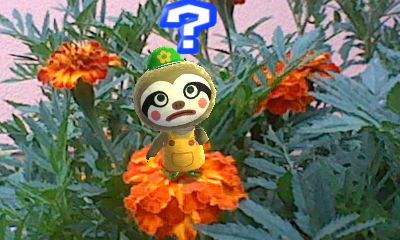 Photos with Animal Crossing Hni_0016