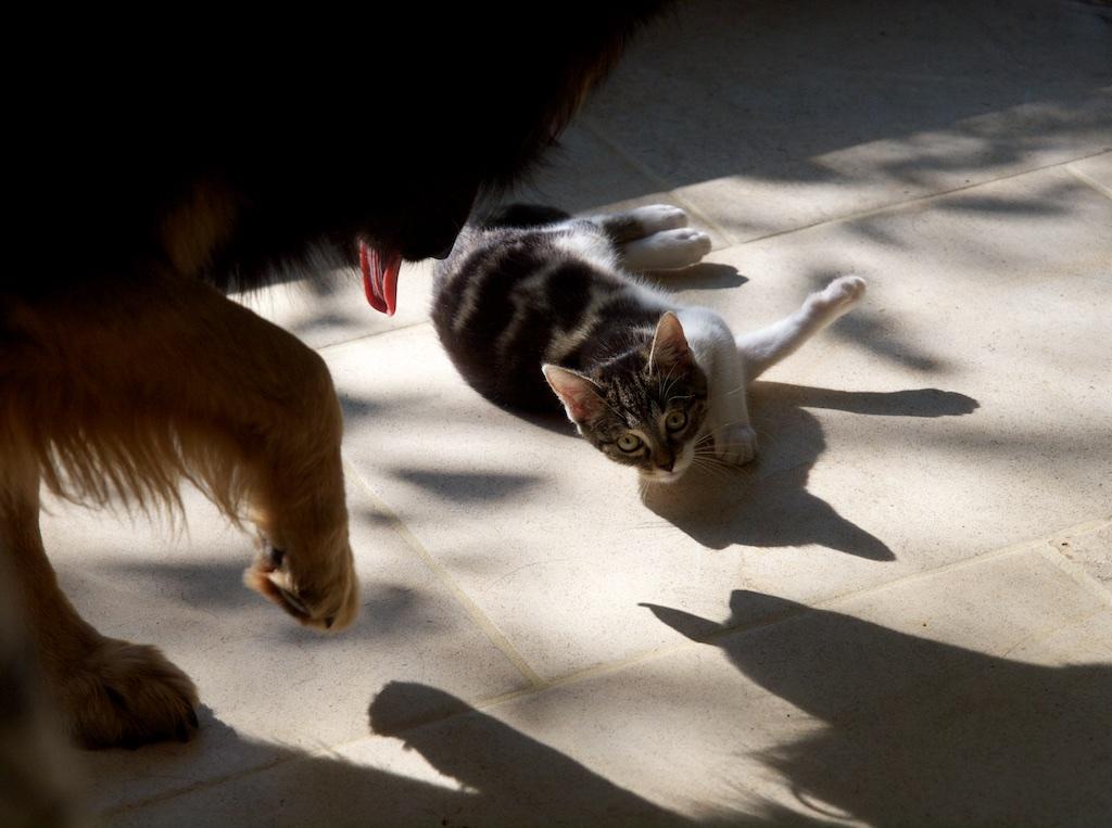 Cat & Dog Cetd10